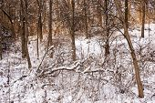 Winter landscape of trees and plants in forest with snow