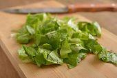 Chopped oakleaf lettuce on a wooden cutting board