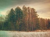 winter forest, retro film filtered, instagram style