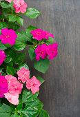 Impatiens Flower On Wooden Background