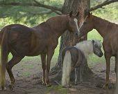 3 horses under shade tree