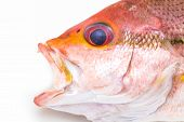 Fresh Red Snapper Fish.