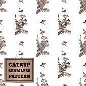foto of catnip  - Health and Nature Collection - JPG