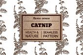 image of catnip  - Health and Nature Collection - JPG
