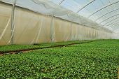 pic of greenhouse  - Organic greenhouse - JPG