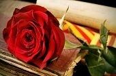 stock photo of rose  - closeup of a red rose and the catalan flag on an old book for Sant Jordi - JPG