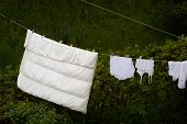 pic of clotheslines  - Housework - JPG