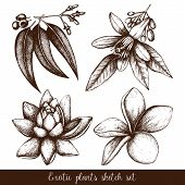 picture of tropical plants  - Vector set of ink hand drawn exotic plants and flowers isolated on white background - JPG