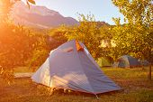 pic of pomegranate  - tents in the pomegranate orchard with riped pomegranates - JPG