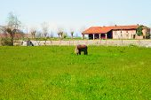 pic of horses eating  - Horse eating grass in front of a farm horizontal image - JPG