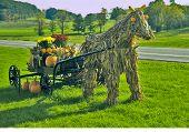 Corn Stalk Horse