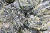 picture of landfills  - Rotten cucumbers in plastic sacks on the landfill - JPG
