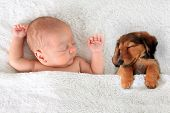 picture of sleeping  - Newborn baby and a dachshund puppy sleeping together - JPG