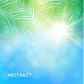 picture of palm  - abstract  blue light background with palm branches - JPG