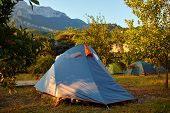 picture of pomegranate  - tents in the pomegranate orchard with riped pomegranates - JPG