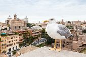 picture of apennines  - seagull and Panorama Cityscape from height - JPG