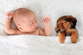 stock photo of pal  - Newborn baby and a dachshund puppy sleeping together - JPG
