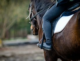 picture of horse-riders  - Rider on a dark bay hobby horse closeup detail - JPG