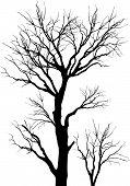 Trees.Ai