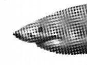 pic of loan-shark  - shark - JPG