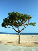 Single tree on Costa Brava coast. Malgrat de Mar.