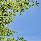Постер, плакат: свежий зеленый бамбук листья на ясное голубое небо фон и вода отражение