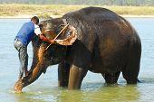 montando um elefante (série: parte 2 de 5)