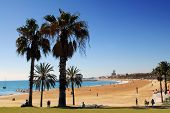 Barcelona beach with palm trees