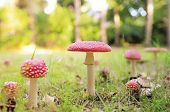Lots of red mushrooms in autumn forest with shallow dof