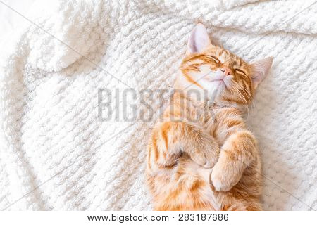 poster of Ginger Cat Sleeping