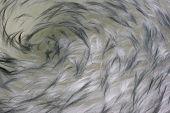 Lambskin - Fur Background With A Vortex Pattern