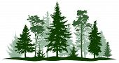 Evergreen Forest Pine, Tree Isolated. Park, Alley Christmas Tree. Vector Illustration. Landscape Of  poster