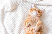 Ginger Cat Sleeping poster