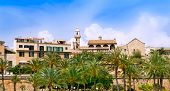 stock photo of calatrava  - Majorca Cathedral garden with palm trees and Calatrava Barrio - JPG