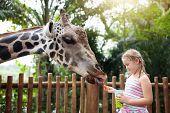 Kids Feed Giraffe At Zoo. Children At Safari Park. poster