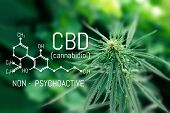 Medical Marijuana And Cannabidiol Cbd Oil Chemical Formula. Growing Premium Cannabis Products poster