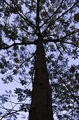stock photo of centenarian  - The beautiful tree in the blue sky.