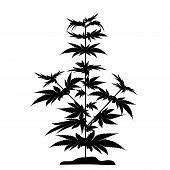 Bush Marijuana Black Silhouette. Bush Marijuana Black Silhouette. Cannabinoid. Hemp For The Treatmen poster