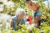 Senior and young woman gardening together in their garden poster