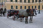 stock photo of schoenbrunn  - Horsw Wagon in country Austria city Wien - JPG
