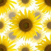 Seamless Background Made Of Beautiful Yellow Sunflowers