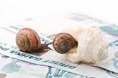 Snail, Sea Shell And Money