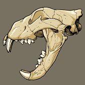 Lion schedel