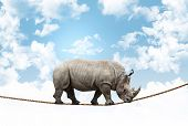 huge rhino balance on rope