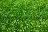 Artificial grass with selective focus as background