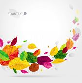 Seasonal Autumn Leaves Background