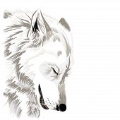 stock photo of werewolf hunter  - Sketch of a wolf - JPG