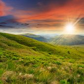 foto of tall grass  - wild plants in tall grass at the top of the mountain at sunset - JPG