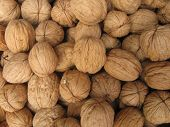 a bunch of walnuts