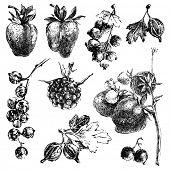 Black and white hand dawn berries